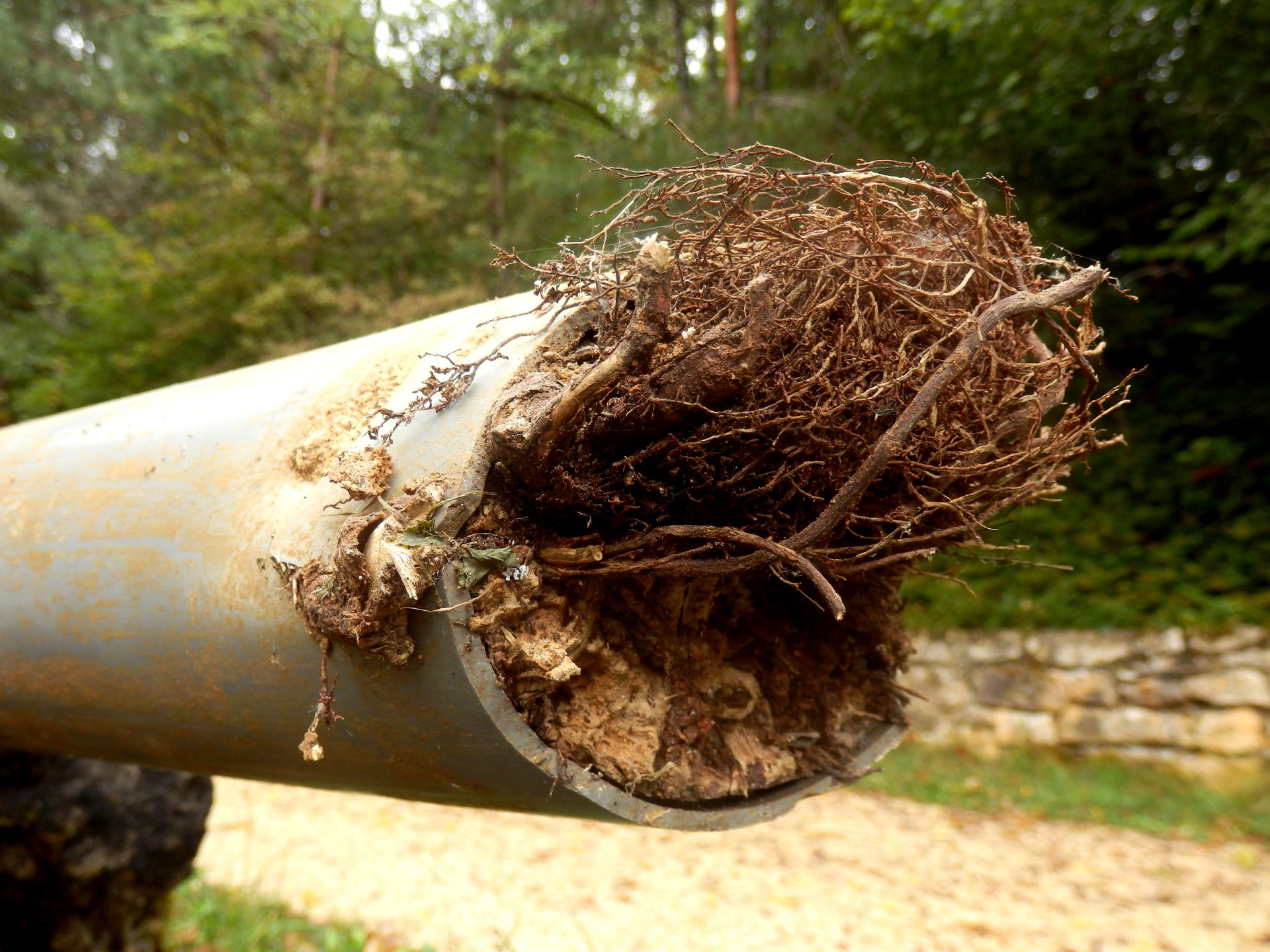 Tree damage Tree Root Damage Services
